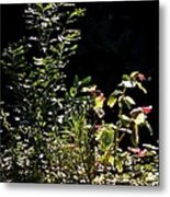 Catching The Last Rays Metal Print