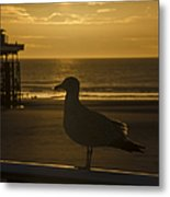 Catching The Rays Metal Print