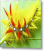 Caterpillar 2 Metal Print