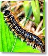 Caterpillar Crawl Metal Print
