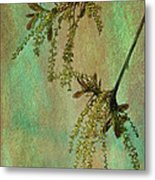 Catkins -- Tree-flowers Metal Print