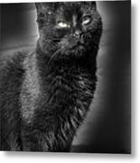 Cats 55 Metal Print