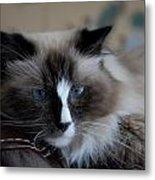 Cats 64 Metal Print by Joyce StJames
