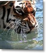 Cats And Water Metal Print