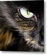 Cats Eye Metal Print