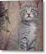 Cat's Eyes #02 Metal Print