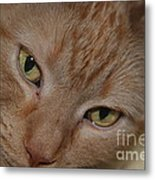 Cat's Eyes Metal Print