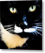 Cats Eyes Metal Print