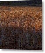 Cattail Bog   #3868 Metal Print