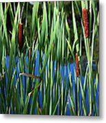 Cattail Pond In Pastel Metal Print