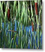 Cattail Pond In Watercolor Metal Print