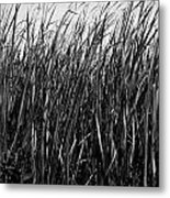 Cattail Reed Background Metal Print
