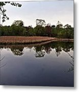 Cattail Swamp I Metal Print