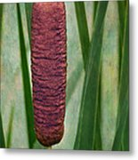 Cattail With Texture Metal Print