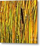Cattails Aflame Metal Print