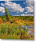 Cattails And Clouds Metal Print