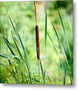 Cattails And Reeds Metal Print
