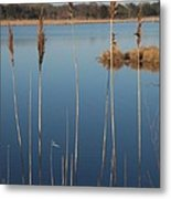 Cattails Cape May Point Nj Metal Print