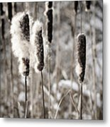 Cattails In Winter Metal Print