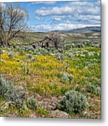 Cattle Camp Metal Print