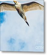 Cattle Egret In Breeding Plumage Metal Print by Shawn Lyte