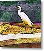 Cattle Egret In Town - Horizontal Metal Print