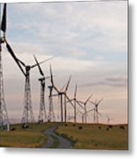 Cattle Graze In Field Next To Windmills Metal Print