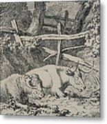 Cattle Resting Metal Print