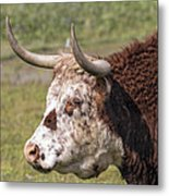 Cattle With Horns Side Portrait Metal Print