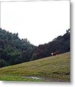 Cattles At Fernandez Ranch California - 5d21106 Metal Print
