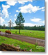 Cattles Roaming Through Hawley Lake Arizona Metal Print