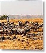Cattles Metal Print
