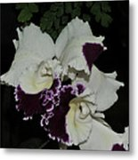 Cattleya Moscombe 'the King'  3 Of 3 Metal Print