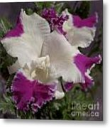 Cattleya Moscombe The King 3999 Metal Print
