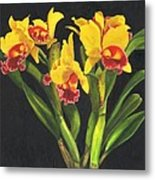 Cattleya Orchid Metal Print by Richard Harpum