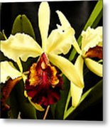 Cattleya Too Metal Print