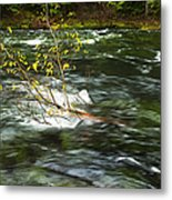 Caught By The Water Metal Print