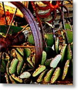 Caught In A Cactus Patch-sold Metal Print