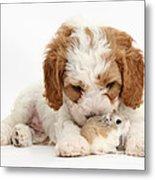Cavapoo Puppy And Roborovski Hamster Metal Print