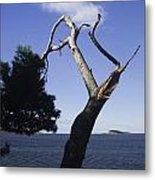 Cavtat Tree Metal Print
