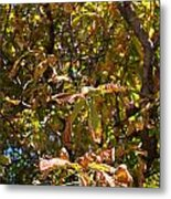 Cchestnut Tree In Autumn Metal Print