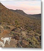 Ceaser, Mocha, And Chico In The Cerbat Mountains Metal Print