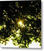 Cedar Filtered Sun Metal Print