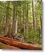 Cedar Logs At Garibaldi Metal Print