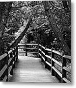 Cedar Pathway Metal Print