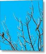 Cedar Wax Wings Metal Print