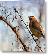 Cedar Waxwing And Berries Metal Print