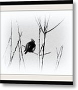 Cedar Waxwing - Black And White  Metal Print