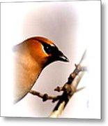 Cedar Waxwing - Img_9833-004 Metal Print