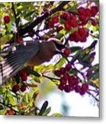 Cedar Waxwing In Flight 030515a Metal Print